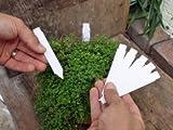 100 Stück Etiketten - Stecketiketten - Pflanzenetiketten 120x17mm von Native