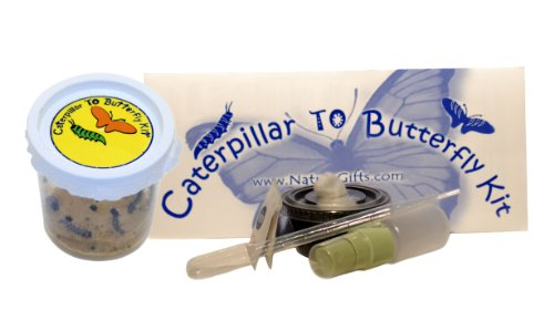5 Live Caterpillars Shipped Now Butterfly Kit Refill Picture
