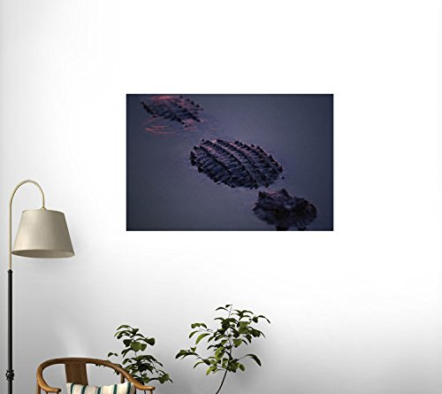 A Submerged American Alligator (Alligator Mississippiensis) Wall Mural - 24 Inches W X 16 Inches H - Peel And Stick Removable Graphic