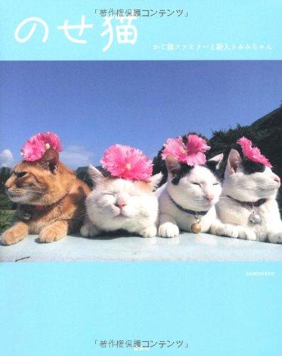 のせ猫 かご猫ファミリーと新入りみみちゃん