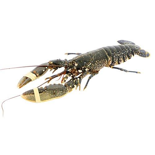 native-lobster-live-600g