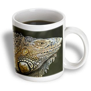 Danita Delimont - Lizards - Green Iguana Lizard, San Ignacio, Belize - Sa02 Wsu0026 - William Sutton - 11Oz Mug (Mug_140886_1)