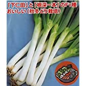 なべちゃん葱[ネギ]【タネ】2dl