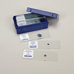 Plant Anatomy Microscope Slide Set