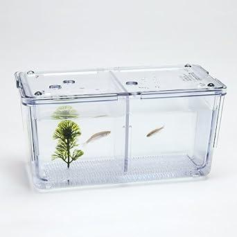 Zebra Fish Breeding Tank
