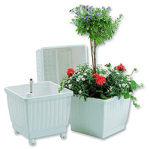 Buy Aqua Planter