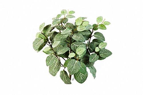 kunstpflanze-fittonia-mit-90-blattern-grun-weiss-35-cm-kunstliche-pflanze-kunstlischer-busch-artplan