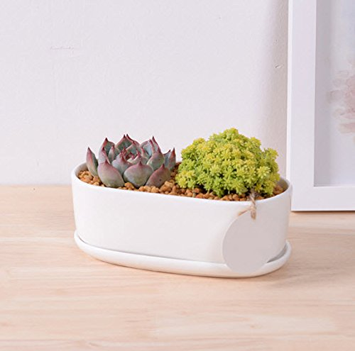 Enkel Modern White Ceramic Oval Succulent Planter Pot With Matching Tray Perfect For Home And Office Makes A Great Gift, Medium