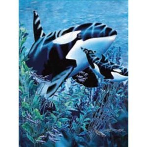 New Signature Collection Queen Size Orcas Killer Whale Korean Mink Blanket front-62112