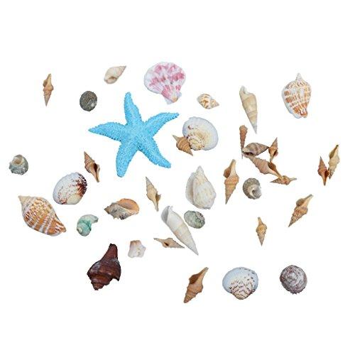 abbellimenti-conchiglie-decorazione-matrimoni-spiaggia-partito-mestiere-stella-marina-naturale