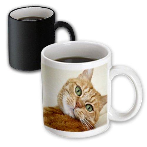 Florene - Cat Art - Print of orange Tabby Cat Painting - 11oz Magic Transforming Mug (mug_203883_3)