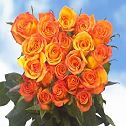 Long Stem Dark yellow Roses | 75 Amber Roses Long