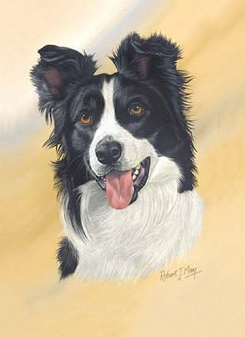 Border Collie Playing Cards - Art by Robert May - 1