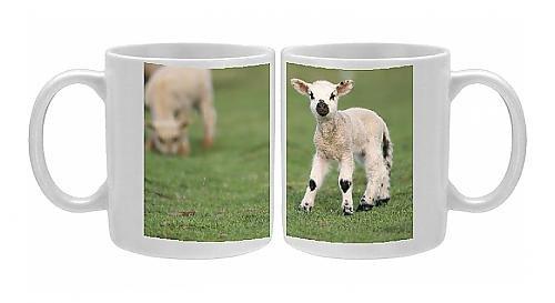 Photo Mug Of Sheep - Lamb front-1064224