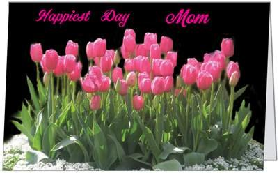 Happy Mother Day Mom Love Mommy Tulips Wife Beautiful