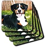 Appenzeller Mountain Dog - Set Of 4 Coasters - Soft