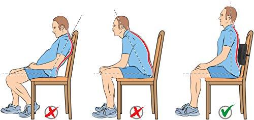Elephix Memory Foam Lumbar Support Cushion Lower Back Pain