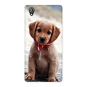 Special Looking Puppy Multicolor Back Case Cover for Lava Iris 800