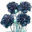 King of the Blacks Carnation 50 Seed-Dianthus-Perennial