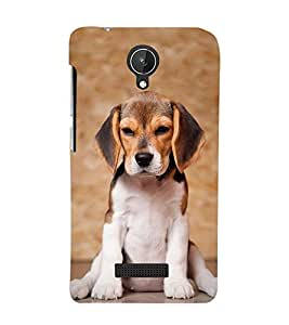 Dog with Big Ears 3D Hard Polycarbonate Designer Back Case Cover for Micromax Canvas Spark Q380