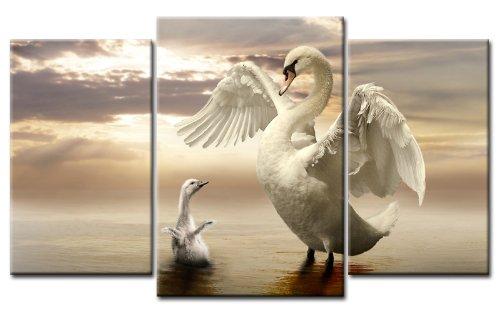 TOP Bild auf Leinwand BABY & SVAN 3 BILDER Art-Nr. M30391 VÖGEL Moderne Bilder fertig gerahmt auf echtem Keilrahmen. Kunstdruck als Wandbild auf Rahmen. Günstiger als Ölbild Gemälde Poster Plakat mit Bilderrahmen riesig! Günstig MADE IN GERMANY