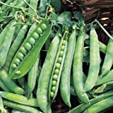 Just Seed Pea - Greenshaft - 40 Seeds - Small Garden Pack