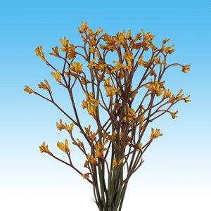 Kangaroo Yellow 120 Flowers