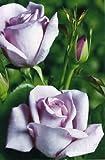 fiori particolari piante perenni fiori particolari caratteristiche. Black Bedroom Furniture Sets. Home Design Ideas