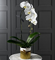 Autograph™ Single Cascade Orchid