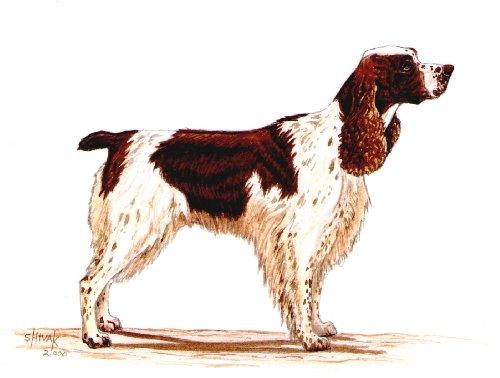Original Springer Spaniel hand painting