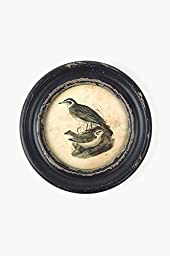 Vagabond Vintage, Rustic Wooden Framed Round Bird Print with Glass Front - Wing 2