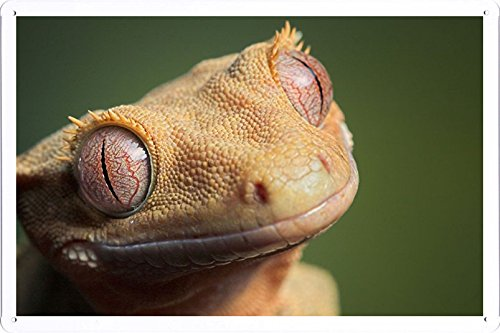 Tin Sign Poster Lizard Eyes Muzzle 26340 (20x30cm) By Nature Scene Painting