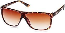 Joe Black Rectangular Sunglasses (Tortoise) (JB-497|C3)