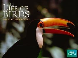 Life of Birds - Season 1