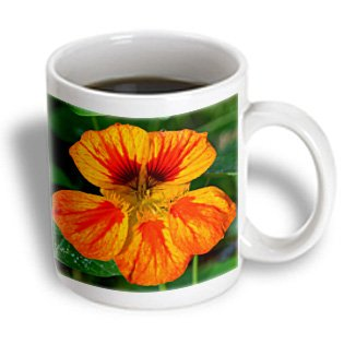 Whiteoak Photography Floral Prints - Nasturtium Are Edible Flowers-This One Is Peppery - 11Oz Mug (Mug_77154_1)