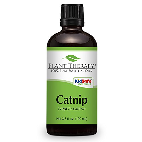Catnip Essential Oil. 100 ml (3.3 oz). 100% Pure, Undiluted, Therapeutic Grade.