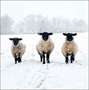Charity Christmas cards - Winter Woollies - 5 charity cards sold in support of Shelter & St Mungo's