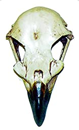 Eagle Skull 2.5\