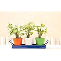 Green Gardenia Table Top Planters With Tray In Tri Color