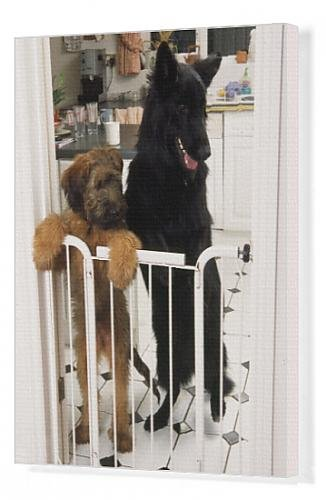 Dog Gates For Inside The House front-1036599