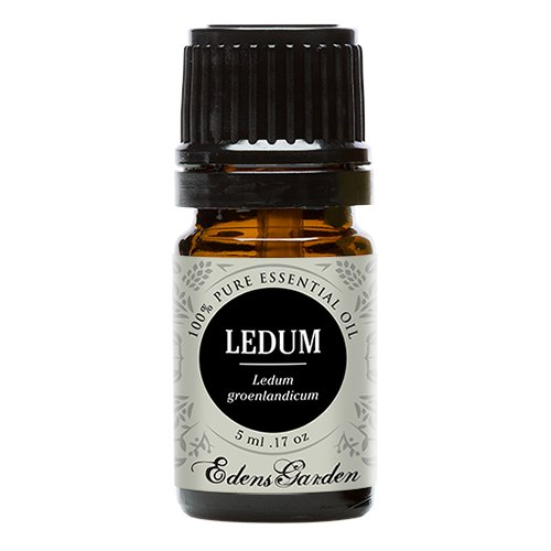 Ledum 100% Pure Therapeutic Grade Essential Oil by Edens Garden- 5 ml