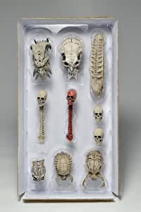 Predators Limited Edition Trophy Skulls Pack - Accessory Pack