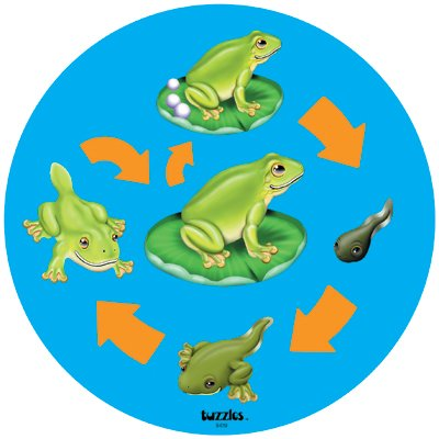Cheap American Educational Products Tuzzles Life Cycle Puzzle – Frog (B001BC8S82)