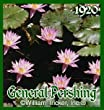 General Pershing Tropical Water Lily