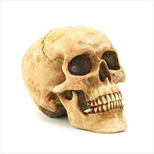 Gifts & Decor Grinning Realistic Replica Human Skull Home Statue from Furniture Creations