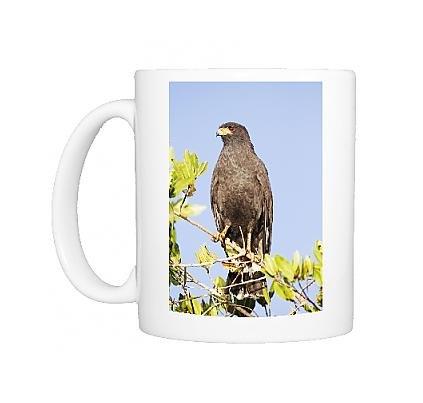 Photo Mug Of Common Black-Hawk. Adult