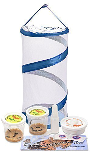 Live Butterfly Kit: Shipped with 10 Painted Lady Caterpillars Now- Pop Up Cage (Painted Lady Butterfly Kit compare prices)