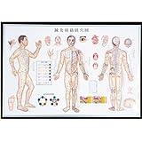 【メディカルブック】鍼灸経路経穴図 (鍼灸経絡系穴図) ポスター (SR-412)