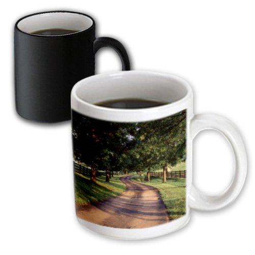 Danita Delimont - Kentucky - Trees And Country Lane, Bluegrass Area, Kentucky, Usa - Us18 Aje0556 - Adam Jones - 11Oz Magic Transforming Mug (Mug_144454_3)