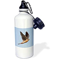 3dRose wb_45750_1 American Kestrel in Flight(Falco Sparverius)Back Bay Reserve, California Sports Water Bottle, 21 oz, White
